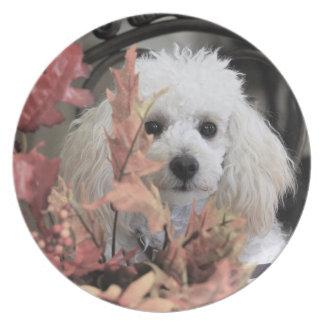 Melaminen för thanksgivingboxarehunden pläterar tallrik