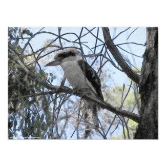 Melbourne - Kookaburra sitter i den gammala Fototryck