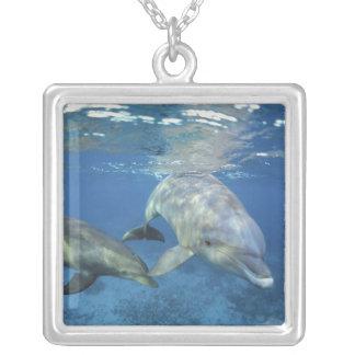 Mexico Cozumel. Bottlenosed delfin, Tursiops 5 Silverpläterat Halsband