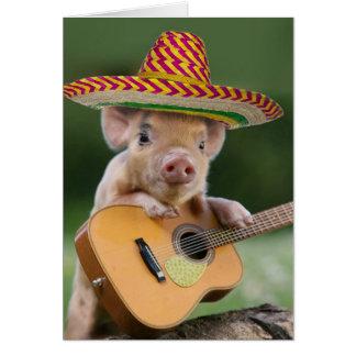 mexikansk gris - grisgitarr - rolig gris OBS kort