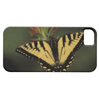 Michigan Houghton sjö. Tiger Swallowtail på iPhone 5 Fodral