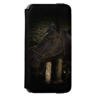 Midnatt Skönhet-Svart hingsthäst