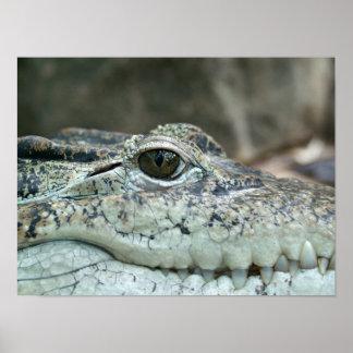 Mig som håller ögonen på dig - krokodilaffisch poster