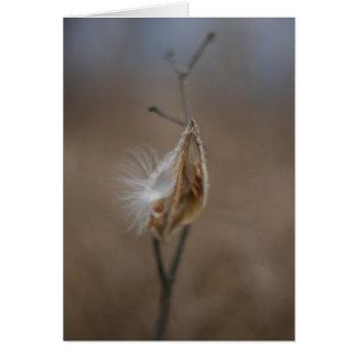 Milkweedpoden noterar kortet OBS kort