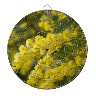 mimosa i blom piltavla