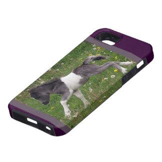 Mini- häst iPhone 5 Case-Mate fodraler
