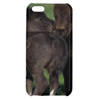 Miniatyrföl 1 iPhone 5C skydd