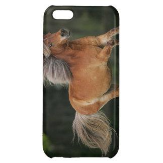Miniatyrhästspring iPhone 5C Skydd
