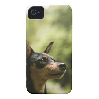 MiniatyrPinscher (Minut-Klämma fast), 2 Case-Mate iPhone 4 Skydd