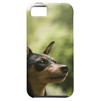 MiniatyrPinscher (Minut-Klämma fast), 2 iPhone 5 Case-Mate Cases