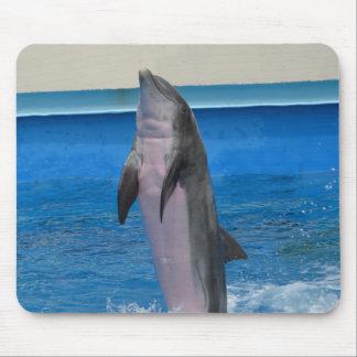 Mississippi delfin musmatta