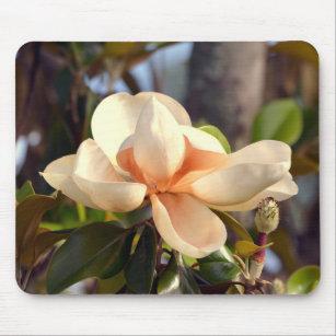 Mississippi Magnolia Musmatta