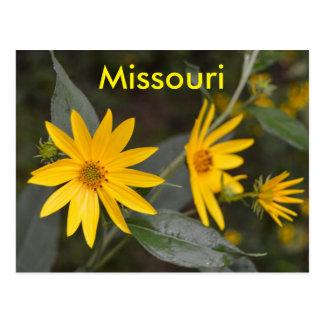 Missouri gula vildblommar vykort