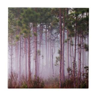 Mist bland grästräd på soluppgången, Everglades Kakelplatta