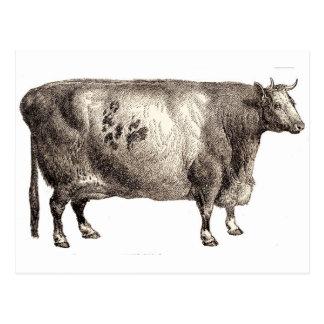 Mitt älsklings- nötkreaturs- (tjuren eller kon) vykort