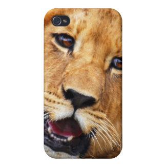 Mitt gulliga lejona ansikte iPhone 4 skal