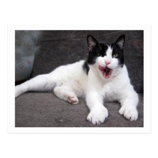 Mittzz C, katten, stor gäspning Vykort