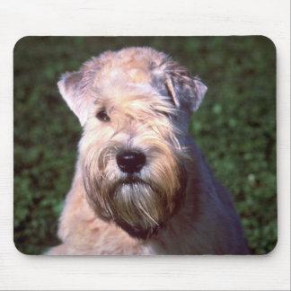 Mjuk-jackad Wheaten Terrier Musmatta