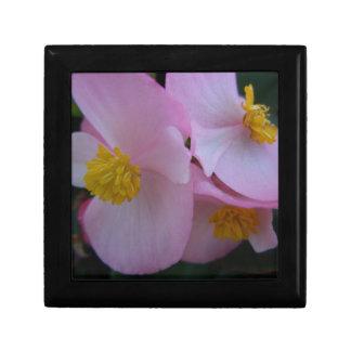 Mjuk rosa Begonia - en sommarregnbåge Minnesask