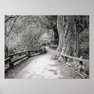 Mjukt tona den lantliga vägen till och med skogen poster