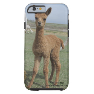 mobilt fodral för alpaca vid kayla tough iPhone 6 fodral