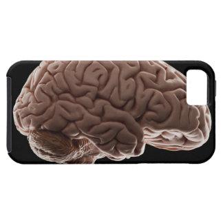 Modellera av människahjärnan, den sköt studion iPhone 5 fodral