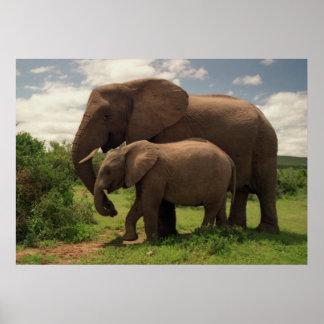 Mödrarkärlek - elefanter poster