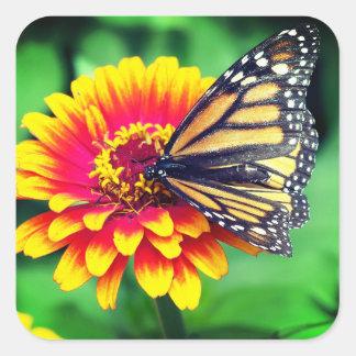 Monarkfjäril Fyrkantigt Klistermärke