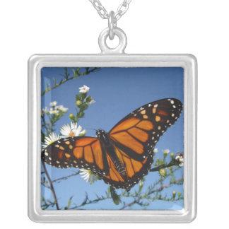 Monarkfjäril, halsband