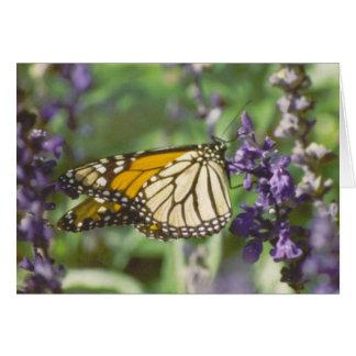 monarkfjäril hälsningskort