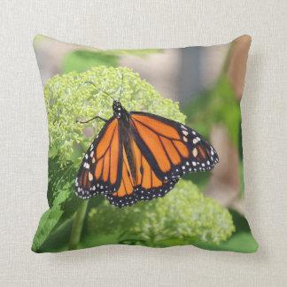 Monarkfjäril Kudde