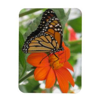 Monarkfjäril Magnet