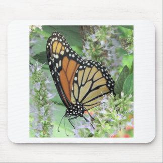 Monarkfjäril Musmatta