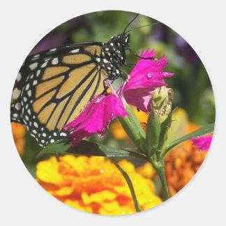 Monarkfjäril på rosa ringblomma-klistermärke runt klistermärke