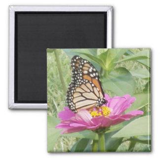 Monarkfjäril, rosa Zinnia Magnet