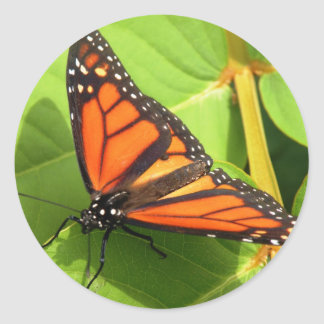Monarkfjäril Runt Klistermärke