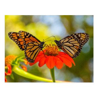 Monarkfjärilar på vildblommar vykort