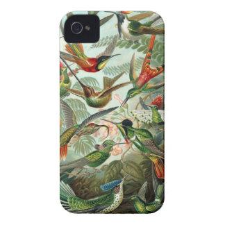 Mönster för konst för surrfågelvintage färgrikt, iPhone 4 Case-Mate skydd