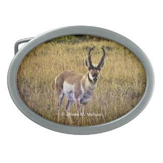 Montana antilop #2