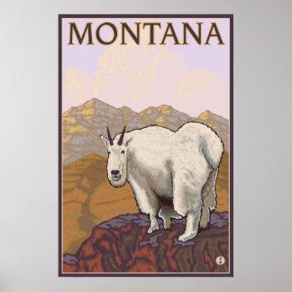 Montana - bergsfår poster