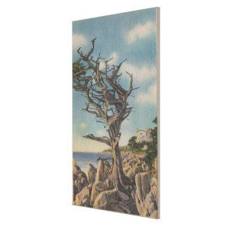 Monterey CA - gammalt häxaträd på 17 Mile Canvastryck