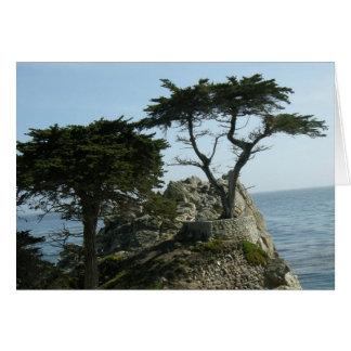 Monterey Cypress hälsningkort Hälsningskort