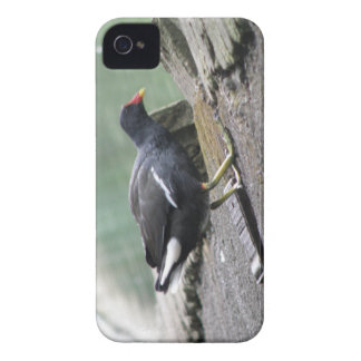 Moorhenblackberry boldfodral Case-Mate iPhone 4 case