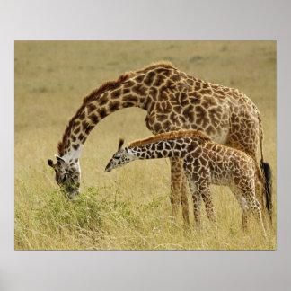 Mor- och bebisMasaigiraff, Giraffa Poster