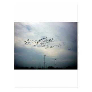 Mord av kråkor vykort