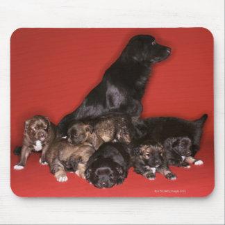 Morhund med valpar musmatta