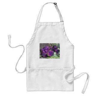 mörk purpurfärgad iris förkläde