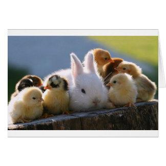 Morkanin adopterar några chickar hälsningskort