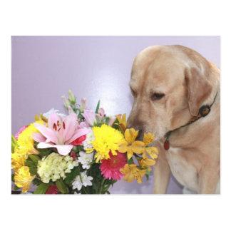 Moses luktar blommor vykort