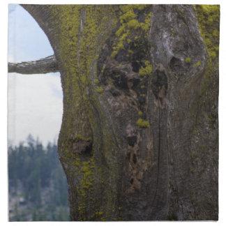 Moss på ett gammalt träd tygservett